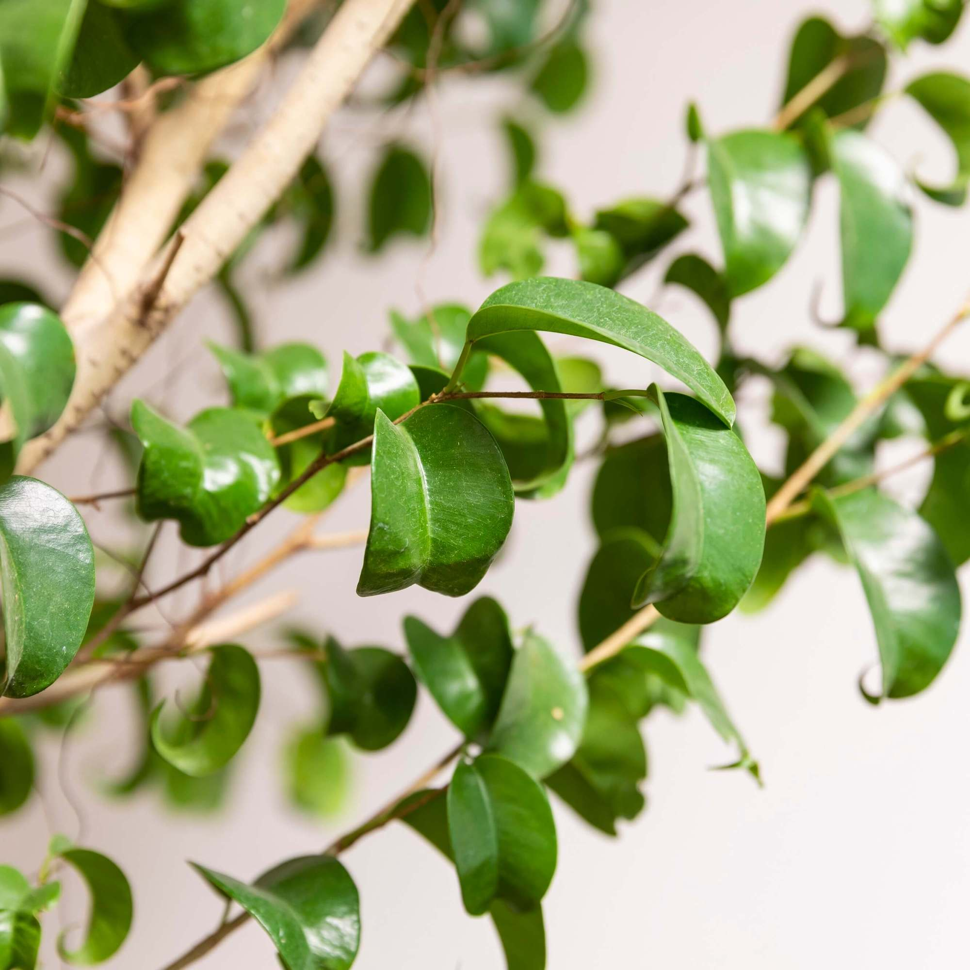 スタシオン 観葉植物